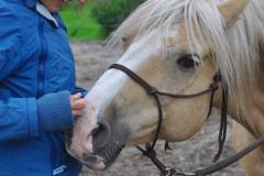 Begegnung | Ganzheitliche Pferdetherapie Manuela Sies |  Foto: Tabea Stallberg