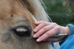 APM am Pferd | Ganzheitliche Pferdetherapie Manuela Sies |  Foto: Tabea Stallberg