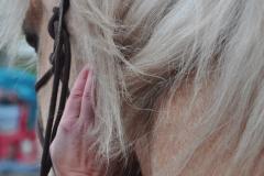Tastbefund |Ganzheitliche Pferdetherapie Manuela Sies |  Foto: Tabea Stallberg
