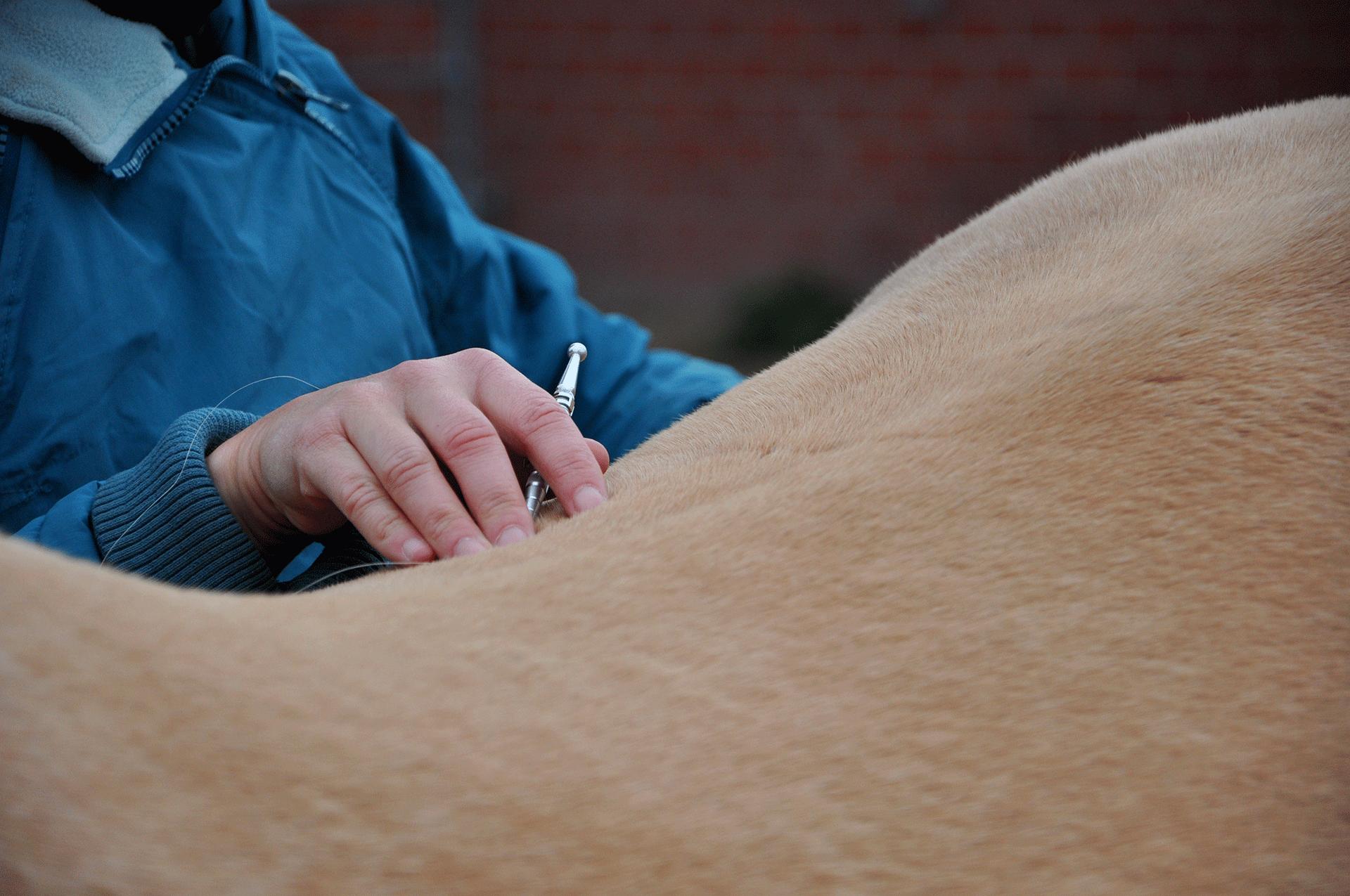 Manuela Sies